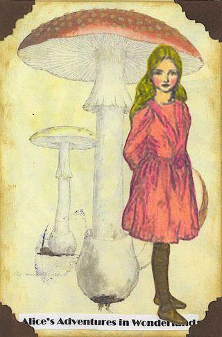 Alicemushroom