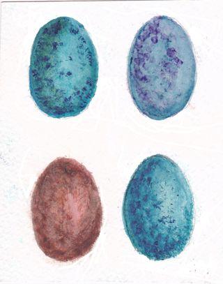 Eggswatercolor