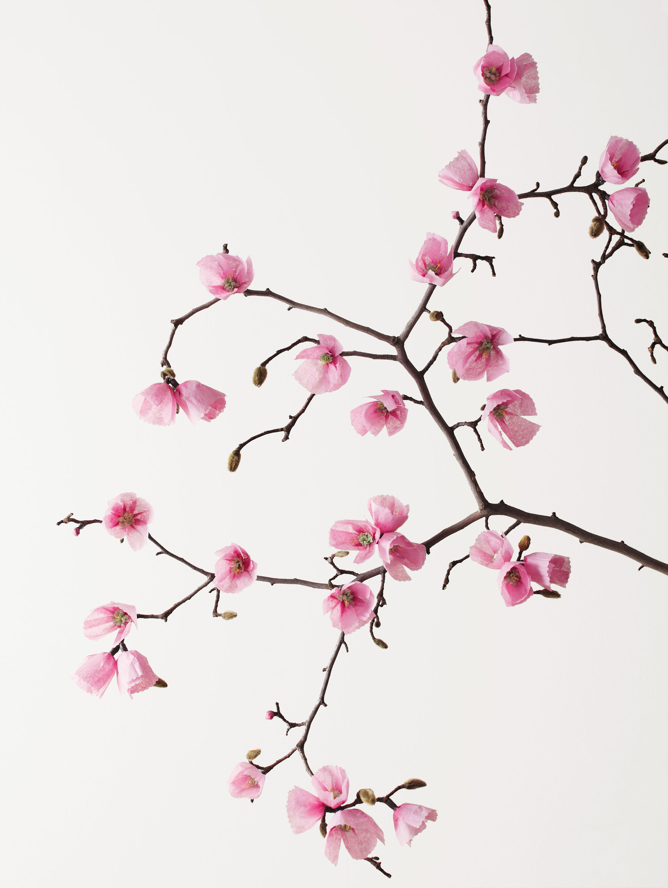 The exquisite book of paper flowers review cinnamon pink cherryblossombranch book image of cherry blossom branch mightylinksfo