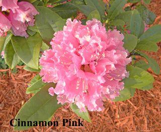 Flower2DarleneKoppel