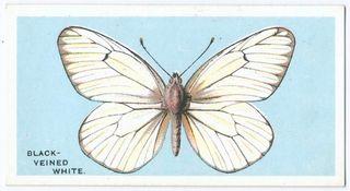 ButterflyNewYorkLibrary